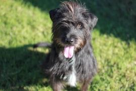 Hattie, the rescue dog